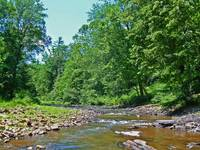 creek scene enhanced_edited-1.jpg