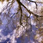 """Tree Reflection"" by JennieAnderson"