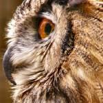 """Owl Beak and Eye"" by JennieAnderson"
