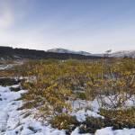 """Fall in Þingvellir #2"" by falconcreations"