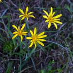 """Yellow flower"" by fejesb"