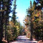 """Road to Wild Basin at RMNP"" by Cynthia_Burkhardt"