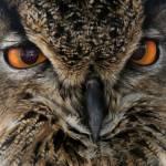 """Owl"" by ktpupp"
