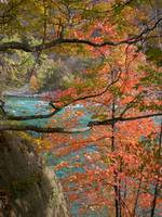 Niagara river through autumn trees 1