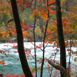 """Niagara river through autumn trees 2"" by evoken"