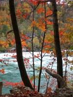 Niagara river through autumn trees 2