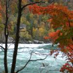 """Niagara river through autumn trees 3"" by evoken"