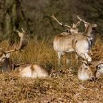 """""""The Deer Family"""" by Simongrenfell"""