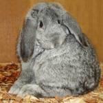 """""""Bunny, by Gina De Gorna"""" by GinaDeGorna"""