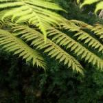 """Frilly Foliage"" by SherryHolderHunt"