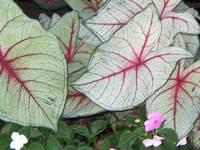 Ornamental Foliage 2