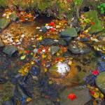 """""""Stream in Autumn"""" by shelshots"""