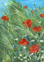 RedPoppies in the grass