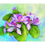"""Orchid Tree Blossom"" by SylviaRamsey"