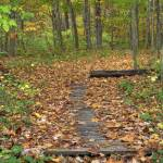 """Fall Creek Gorge - Path (IMG_6427)"" by jvandyke"