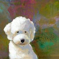 I am Thinking About It - Thoughtful white dog Art Prints & Posters by Melissa Robinson