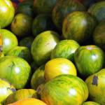 """Green Tomatoes 8808"" by photohogdesigns"