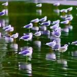 """""""A Sheet of gull"""" by kenart"""