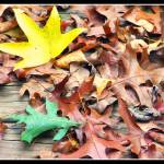 """leaves"" by CLC_Designs"