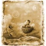 """""""Boy in nest"""" by JamesCarroll"""