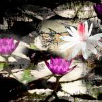 """Water Lilies Layers of Texture"" by Cynthia_Burkhardt"