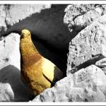 """""""curiosità"""" by 35mmcameras"""