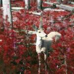 """yellowstone - deer"" by rosemania"