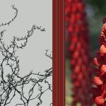 """Tree tops neutral,red lines,red flowers"" by CazadoraStudio"