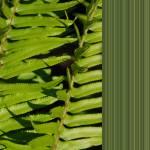 """Fern & Olive Lines 1"" by CazadoraStudio"