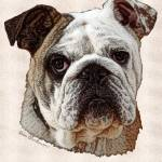 """Bulldog"" by diane"
