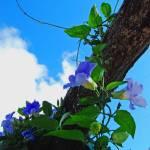 """SKY FLOWERS"" by Isana"