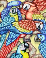 Macaws2