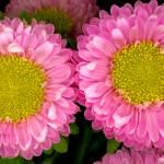 """Flower for Three"" by dnldwks"