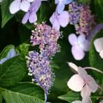 """""""The Purple Flowers"""" by dnldwks"""