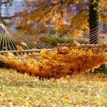 """Autumn Beckons"" by preetalina"