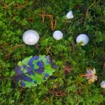 """Natures Carpet"" by Dawsonimages"
