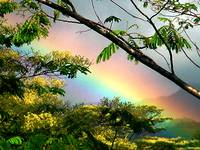 Hawaii Jungle Rainbow