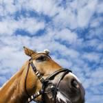 """Horse Portrait"" by kolvenbach"