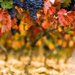 """Fall Colors in La Rioja, Spain"" by RyanOpaz"