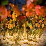 """Rainbow of Vines"" by RyanOpaz"