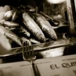 """Sardines Awaiting their Fate"" by RyanOpaz"