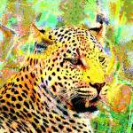 """Leopard in Love-donovan"" by Donovan2012"