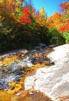 Fall Colors, Pisgah National Forest, NC