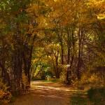 """bike trail - fall"" by DCLWolf"