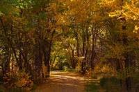 bike trail - fall