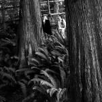 """""""Ferns"""" by carlnelson"""