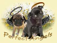 Perfect Pug Angels