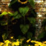 """3 Sunflower"" by S_Arinofsky_Imagery"