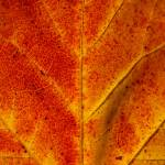 """A close look at fall"" by Angiezpics"