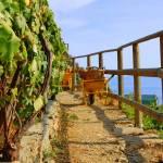 """""""Cinque Terre Vineyard"""" by josejlepe"""